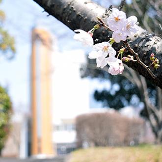 2019/4/6 (土) <新入生対象>入学式のご案内